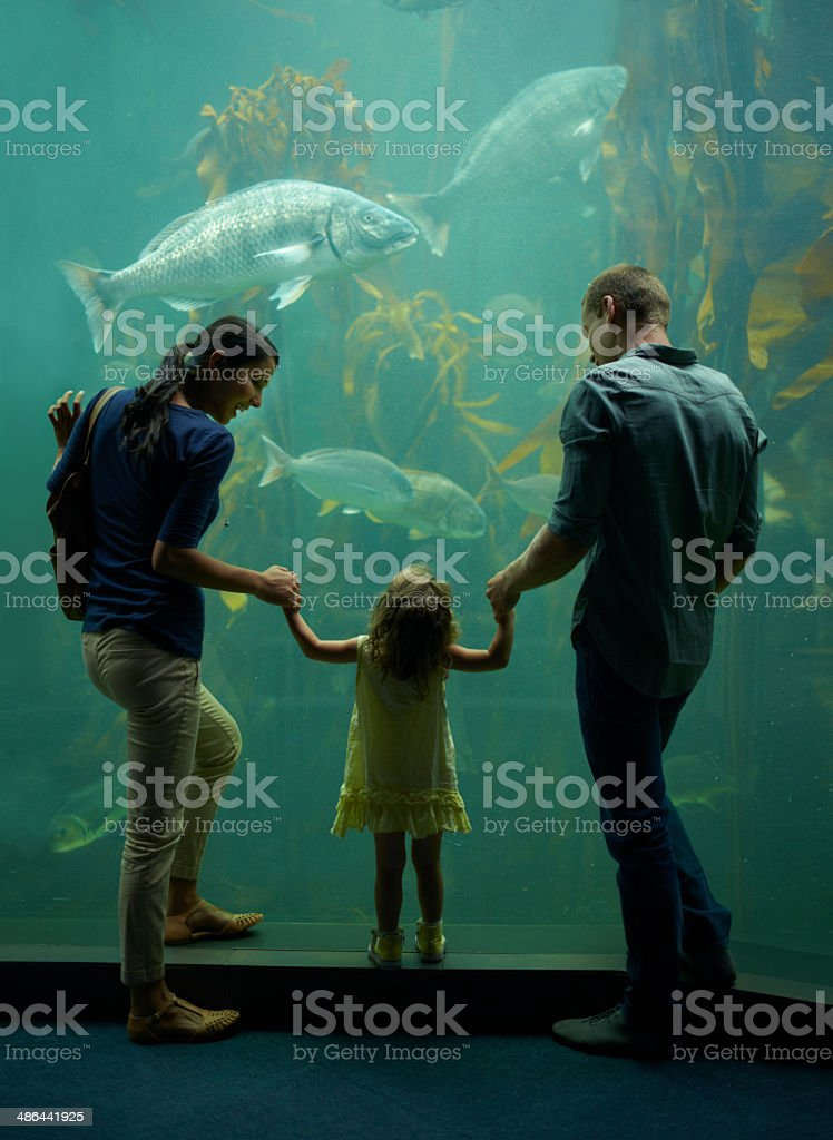 Family day at the aquarium stock photo