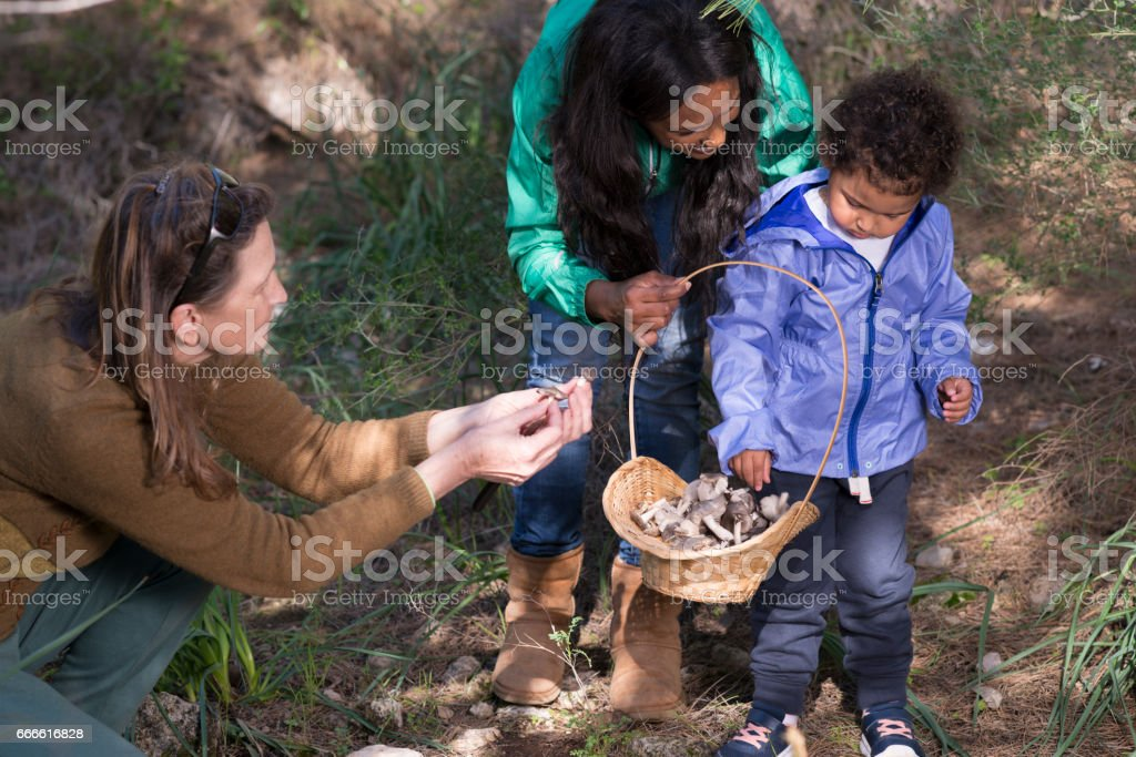 Family day outdoors - picking fresh edible mushrooms in wild forest. stock photo