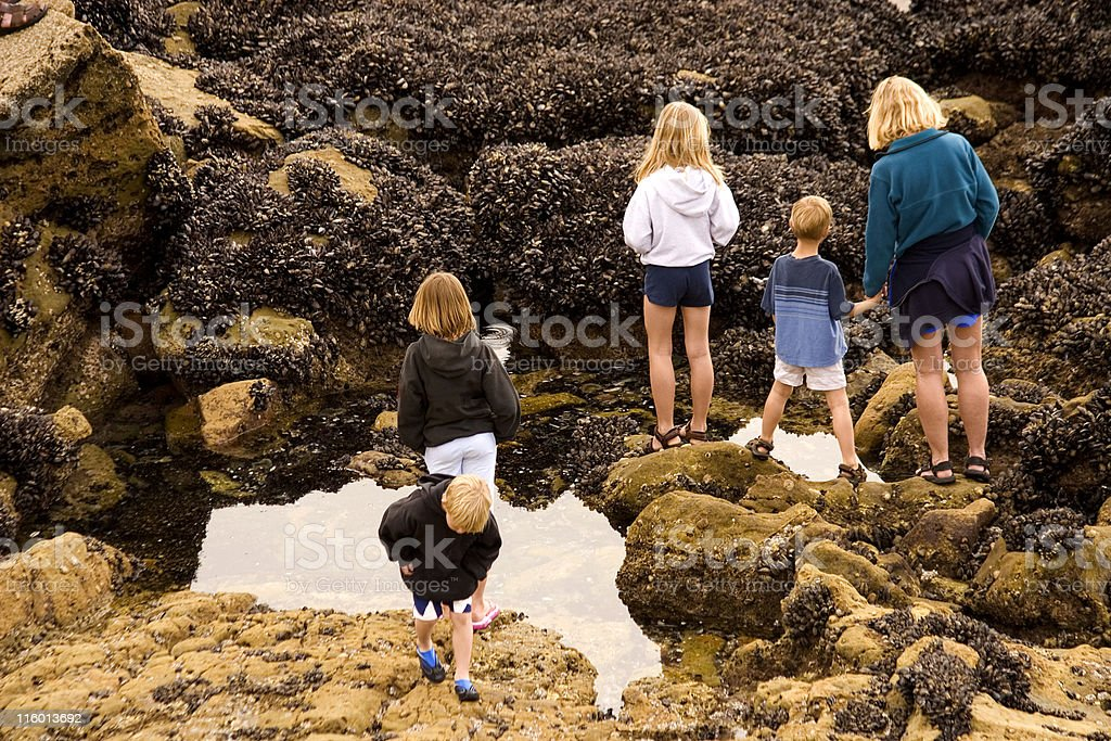 Family exploring a tide pool royalty-free stock photo