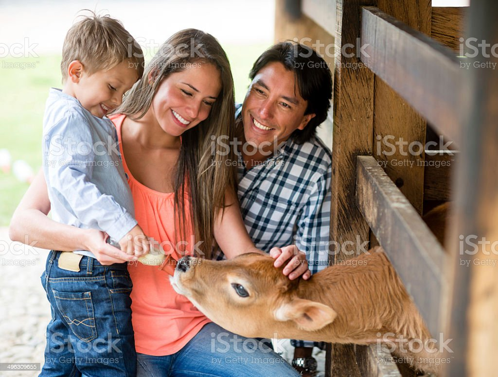 Family feeding a veal stock photo