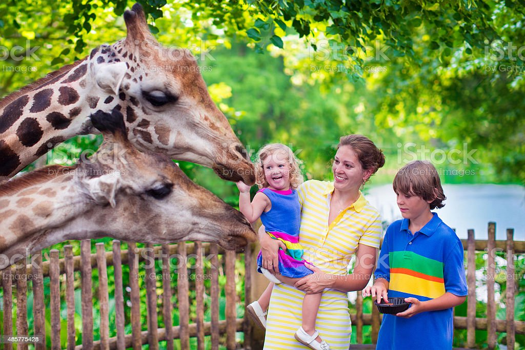 Family feeding giraffe in a zoo stock photo