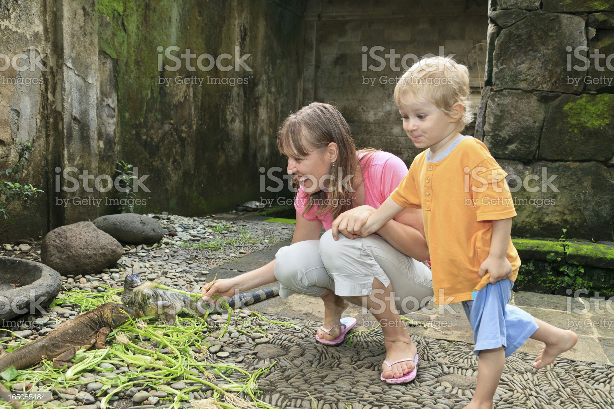 family feeding iguanas royalty-free stock photo