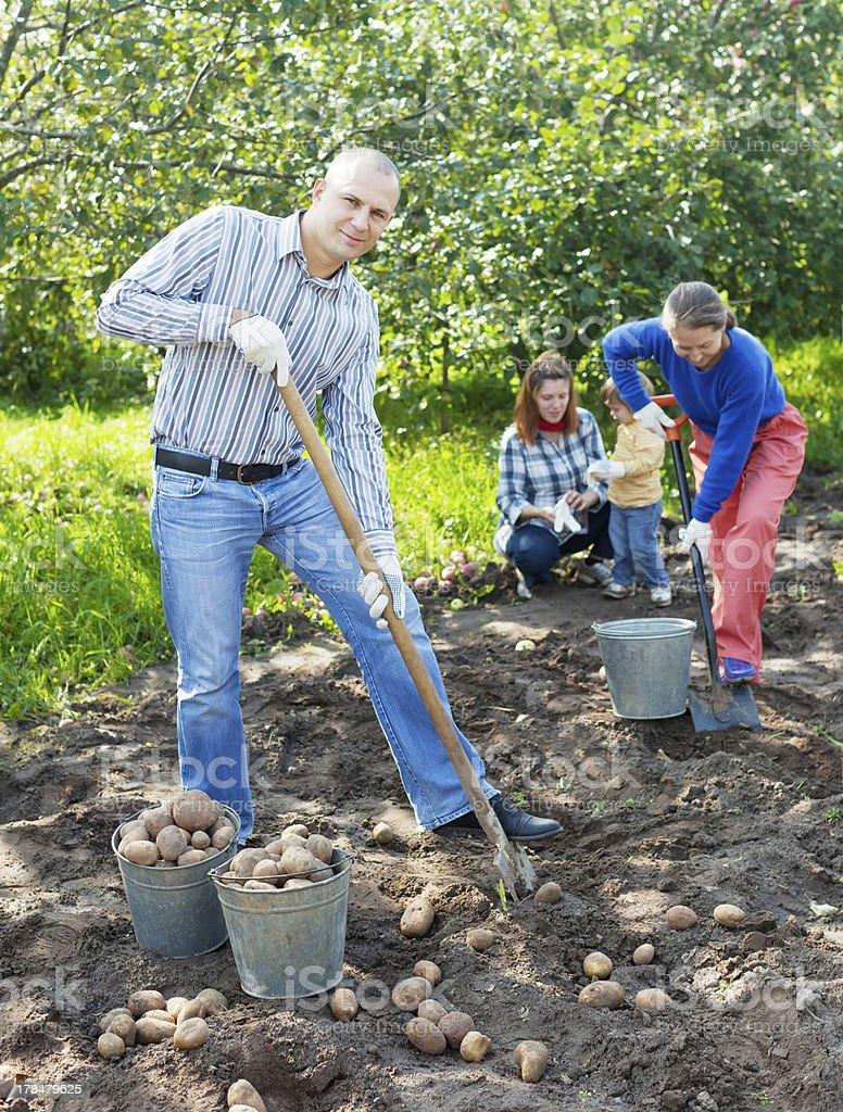 family harvesting potatoes in field royalty-free stock photo