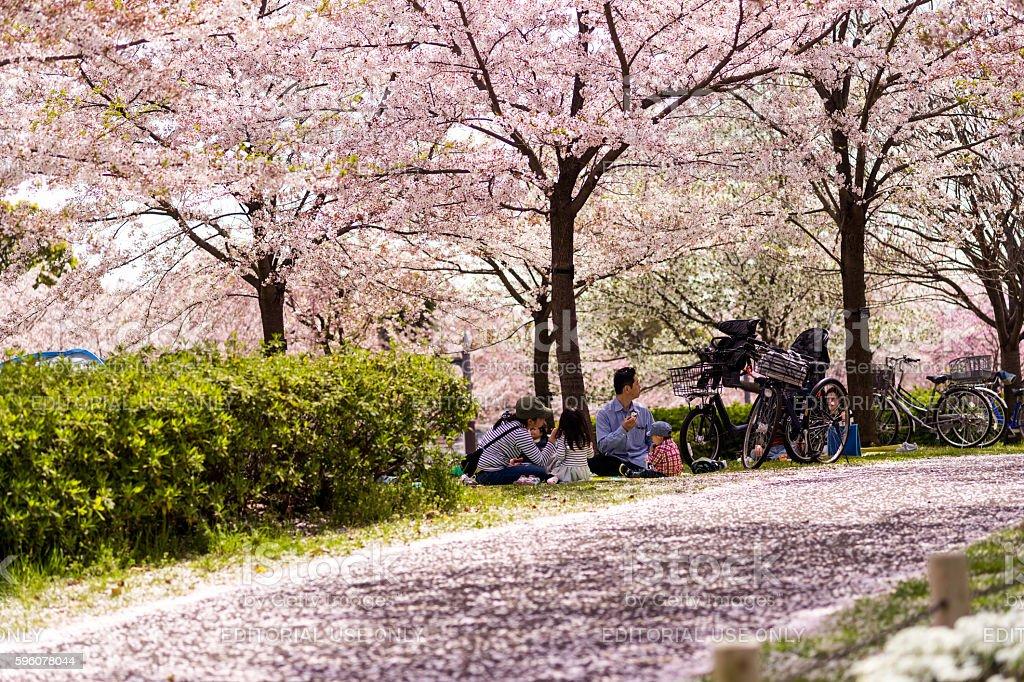 Family having a picnic under sakura tree in Tokyo, Japan. stock photo