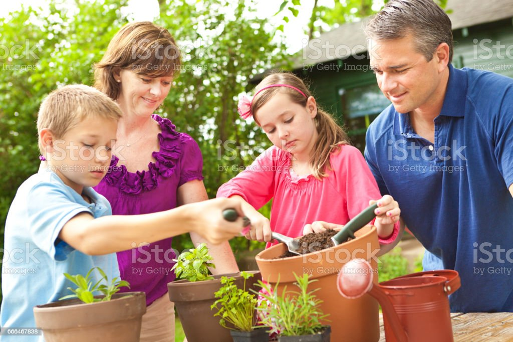 Family Home Gardening, Planting herb garden in pot stock photo