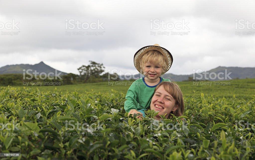 family in tea field royalty-free stock photo