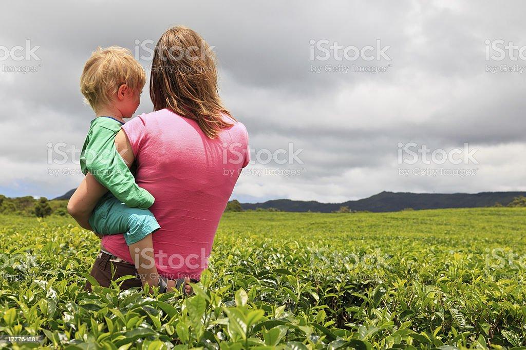 family in tea plantation field royalty-free stock photo
