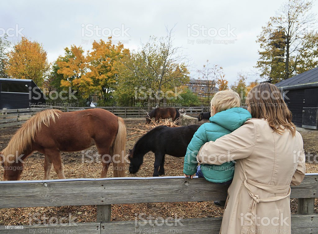 family looking at horses royalty-free stock photo