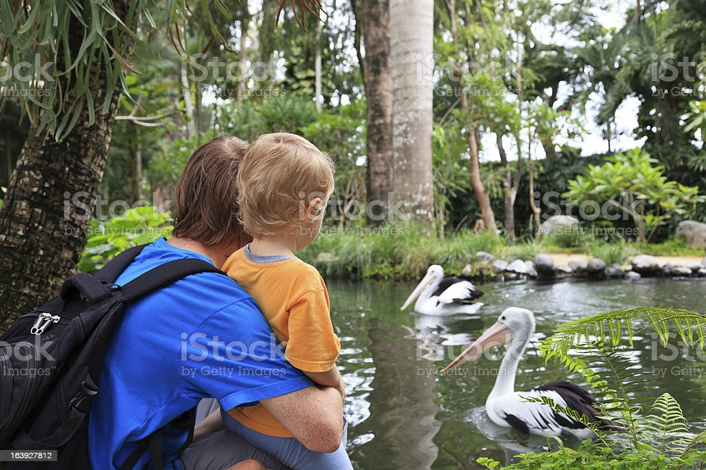 family looking at pelicans stock photo