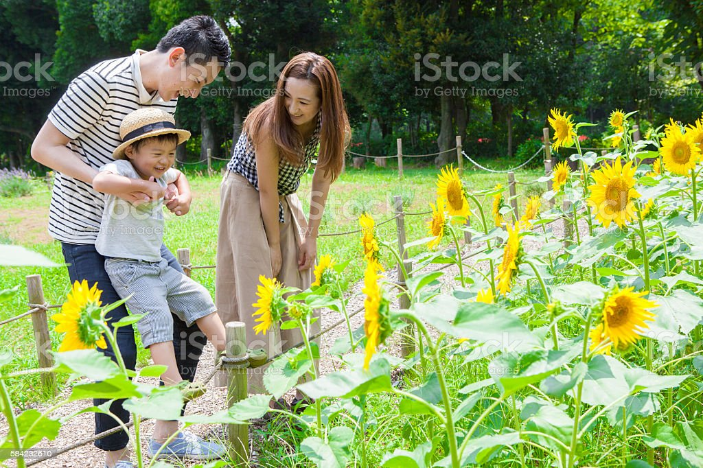 Family looking at the sunflower in the park stock photo