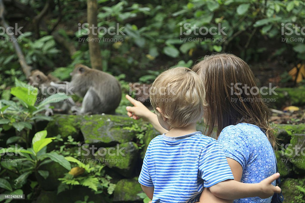 family looking at wild monkey stock photo