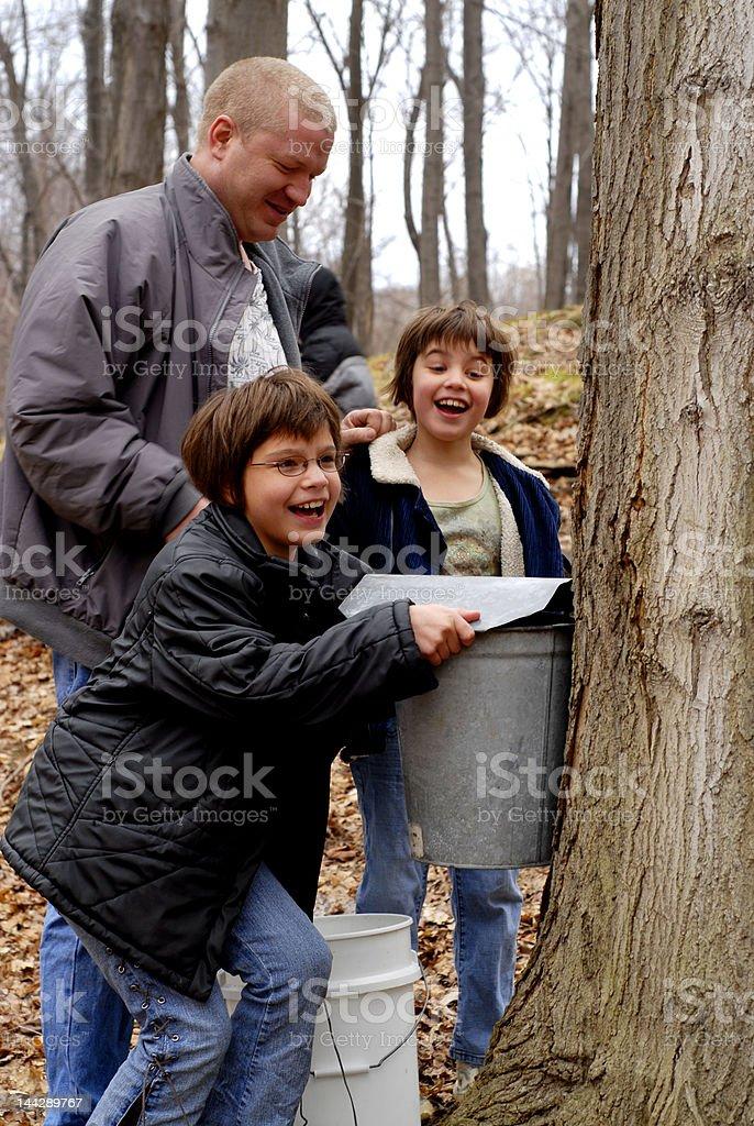 Family Maple Sugaring stock photo