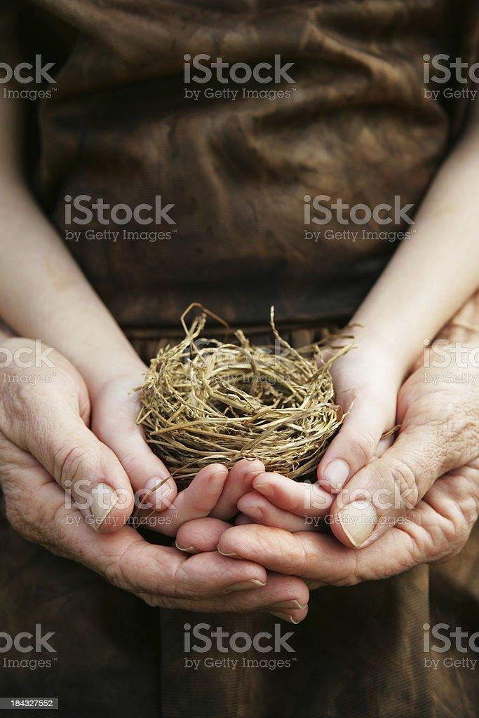 Family Nest royalty-free stock photo