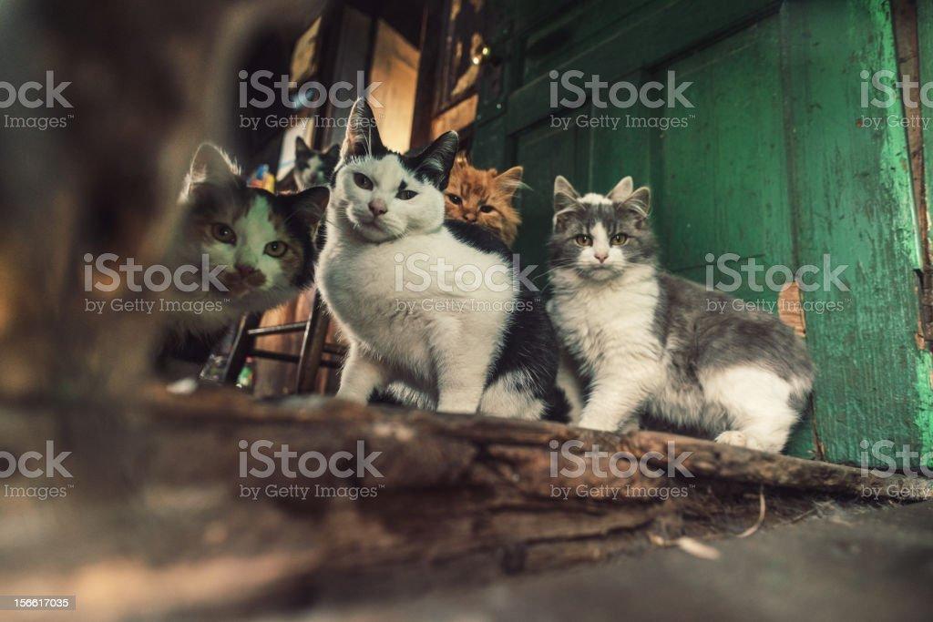Family of Cats stock photo