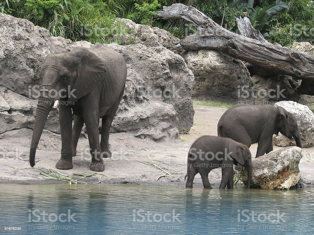 Family of elephants beside body of water with two juveniles royalty-free stock photo