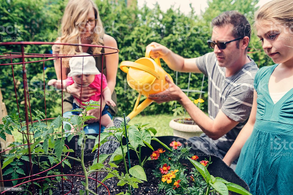 Family of four gardening together with baby outdoors. stock photo