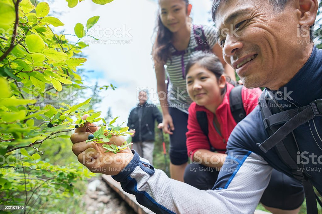 Family of Hikers Foraging and Picking Wild Berries in Forest stock photo