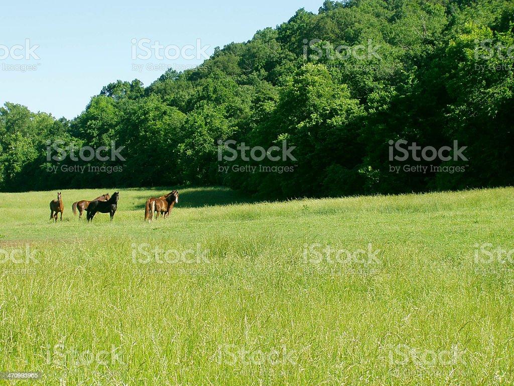 Family of Horses royalty-free stock photo