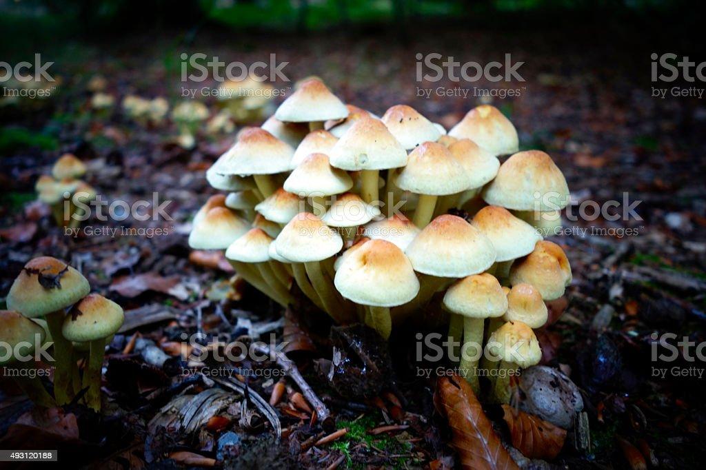 Family of mushrooms stock photo