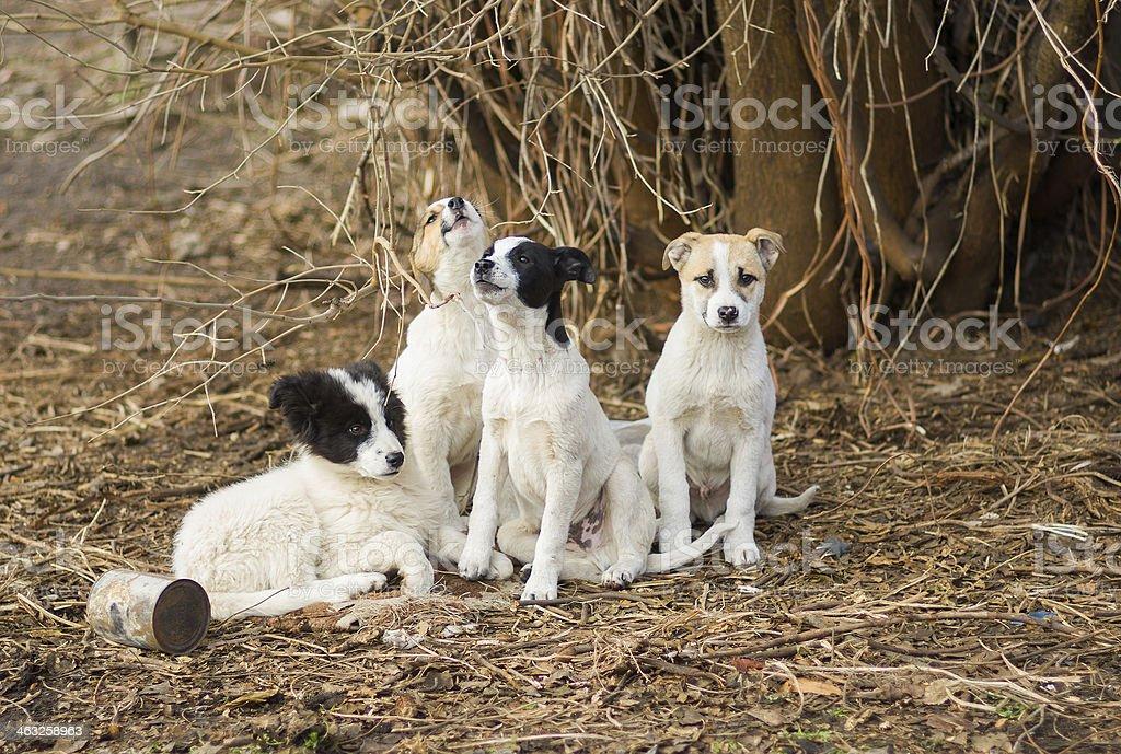 Family of stray puppies stock photo