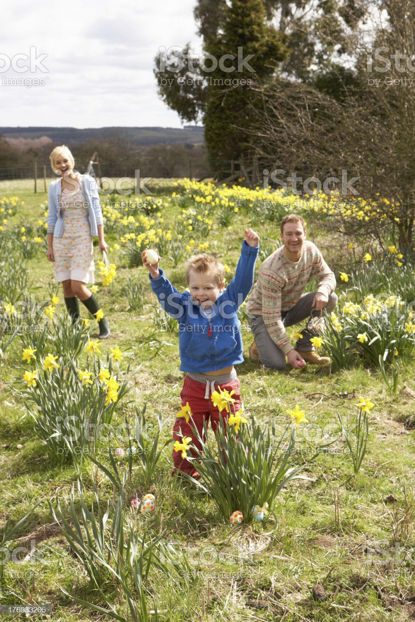 Family On Easter Egg Hunt In Daffodil Field royalty-free stock photo