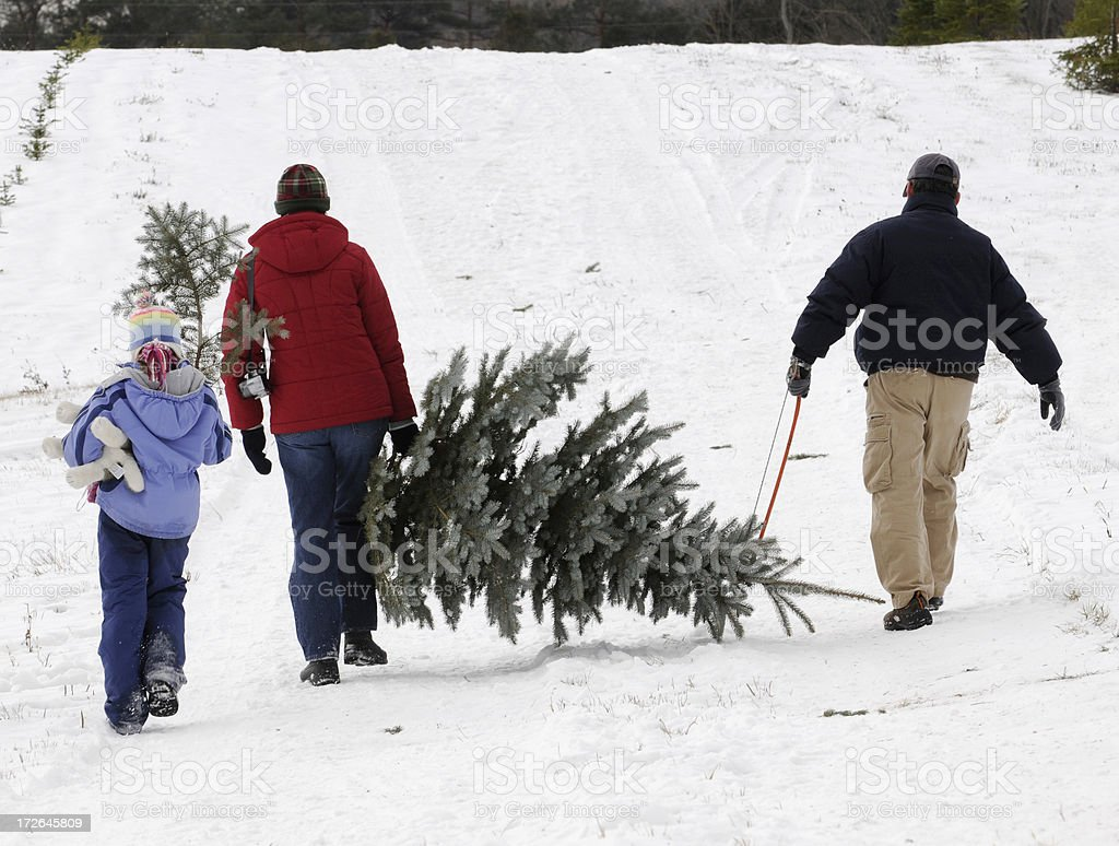 Family outing to cut their Christmas Tree royalty-free stock photo