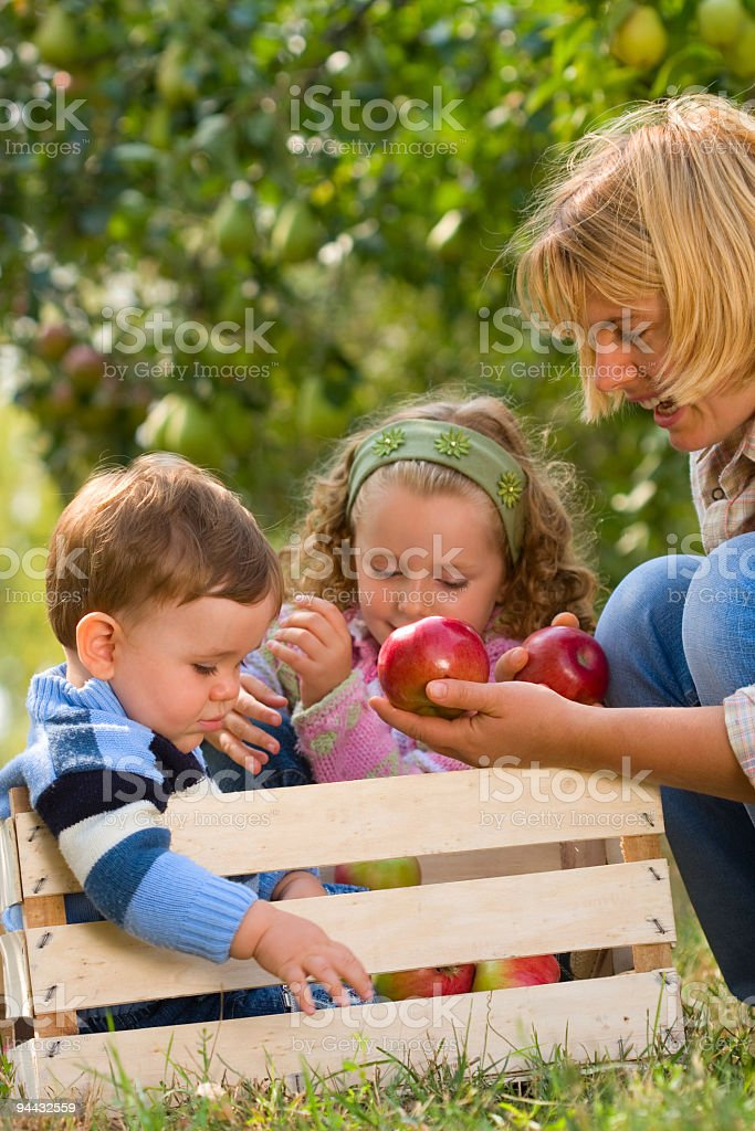 Family picking apples royalty-free stock photo