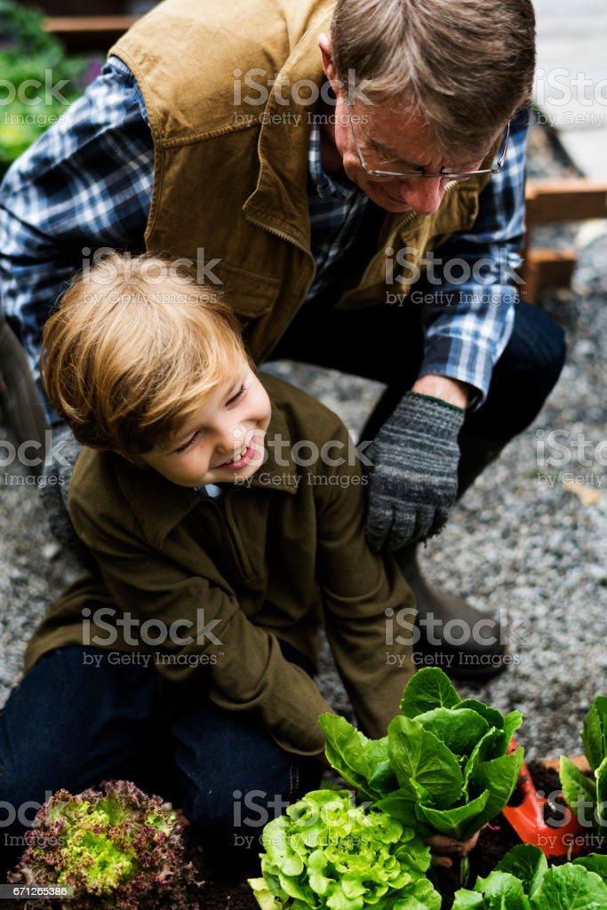 Family picking vegetable from backyard garden stock photo