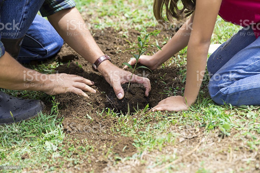 Family Planting stock photo