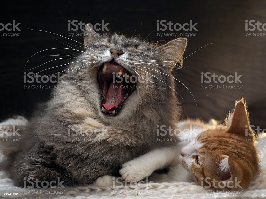 Family portrait of two cats stock photo