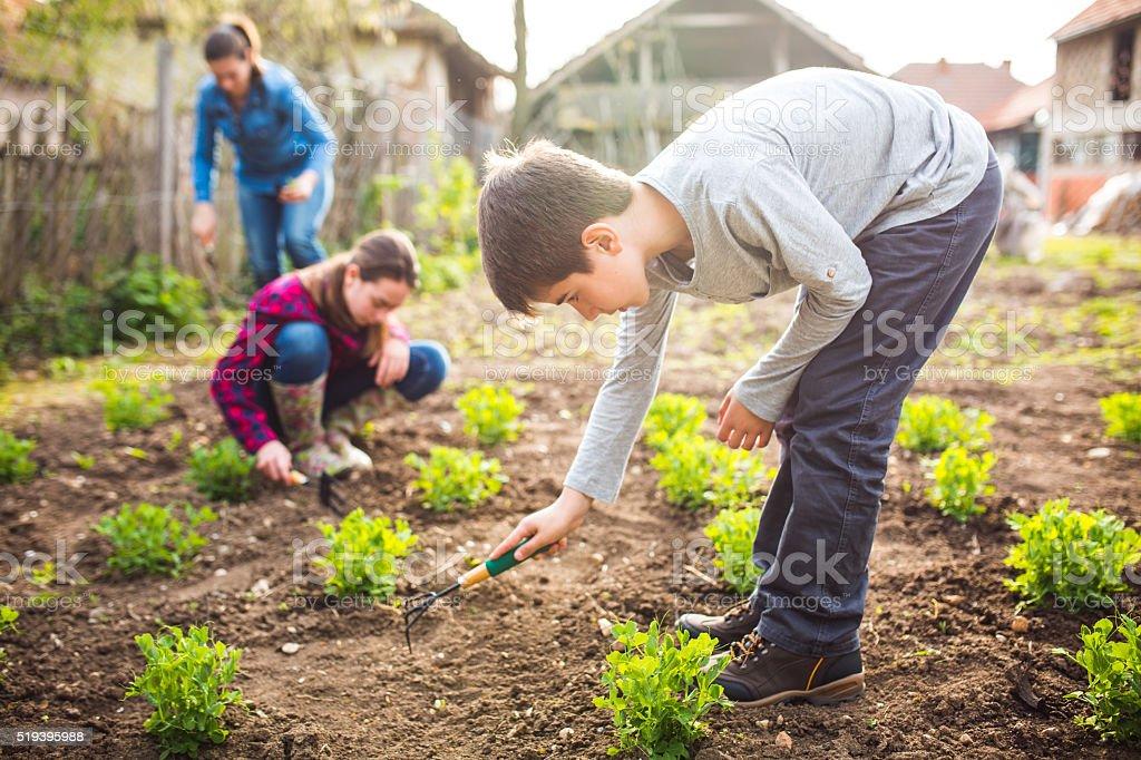 Family production of organic food stock photo