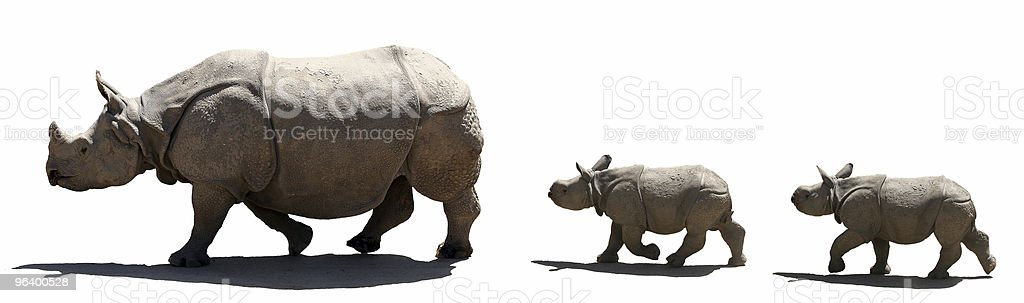 Family rhino isolated royalty-free stock photo