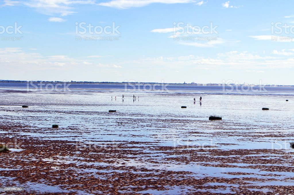 Family running on the beach at low tide stock photo