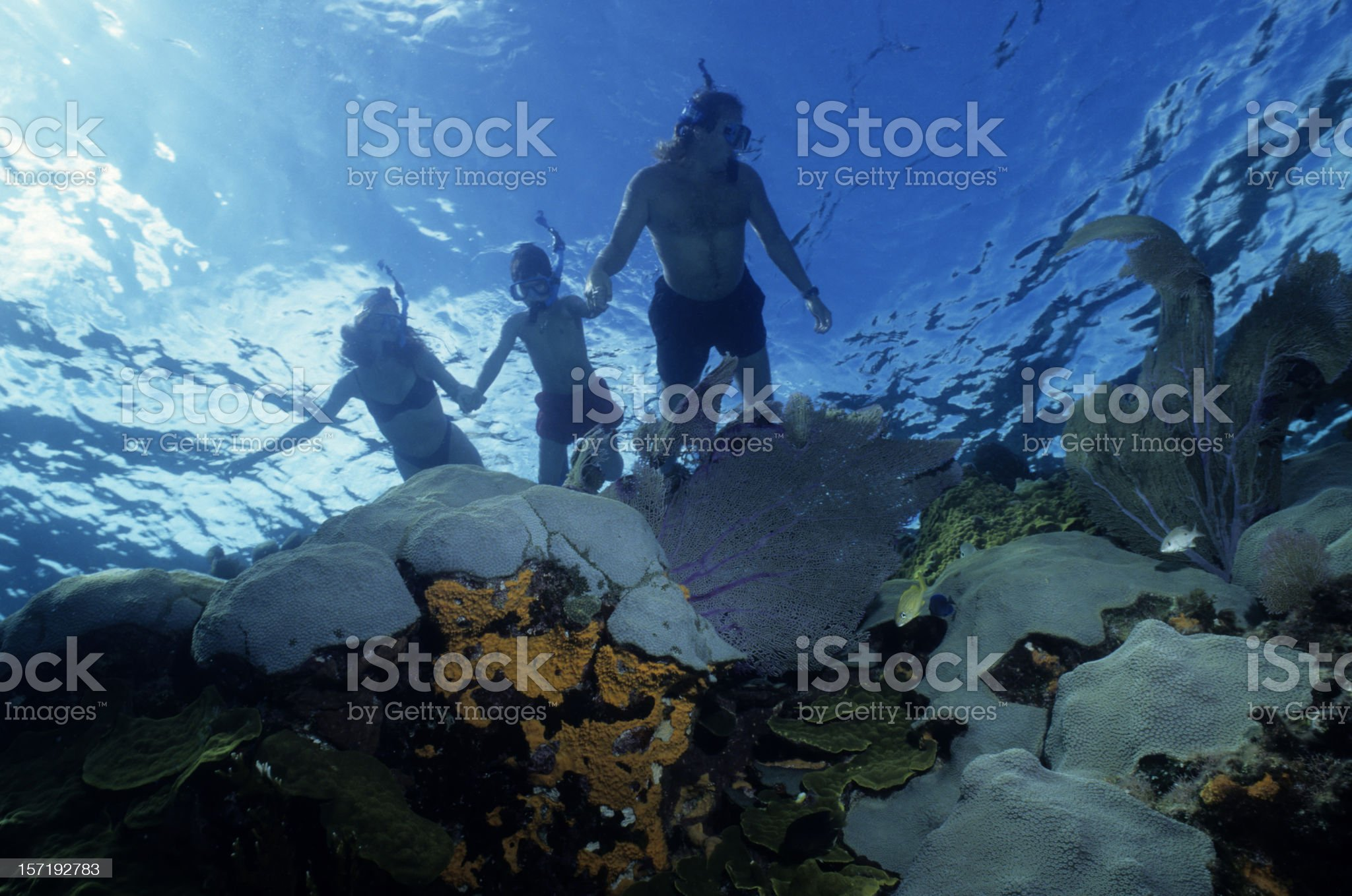 Family Snorkeling royalty-free stock photo