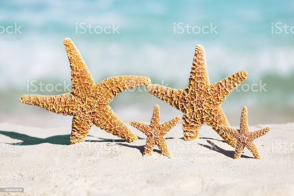 Family Summer Beach Holiday Vacation with Children, Starfish Party stock photo