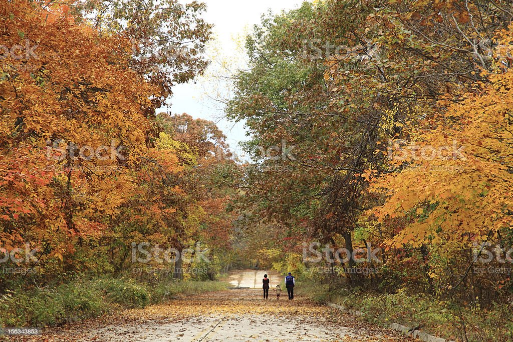 Family taking a walk under fall foliage and maple leaves royalty-free stock photo