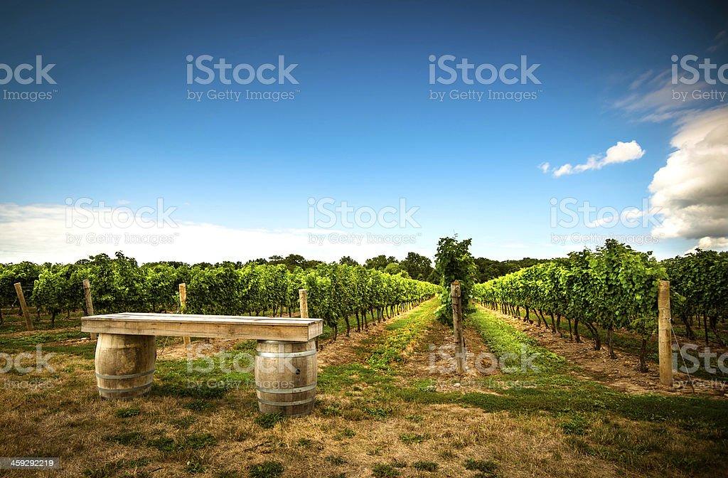 family vineyard stock photo