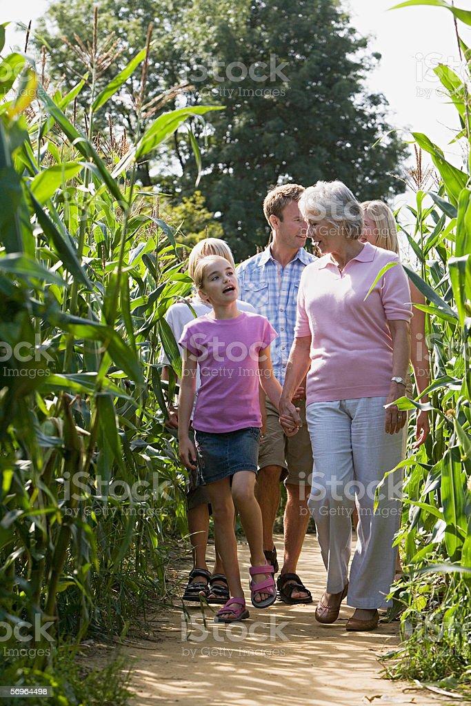 Family walking between corn plants royalty-free stock photo