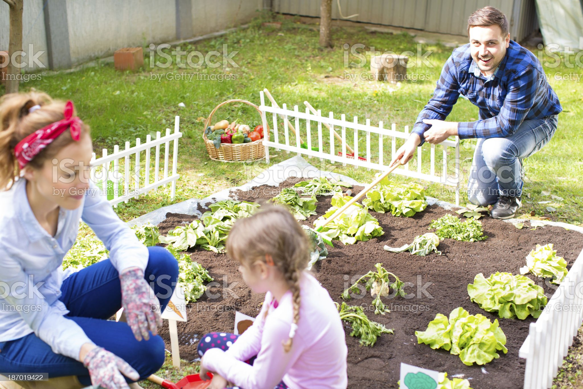 Family working at vegetable garden. royalty-free stock photo