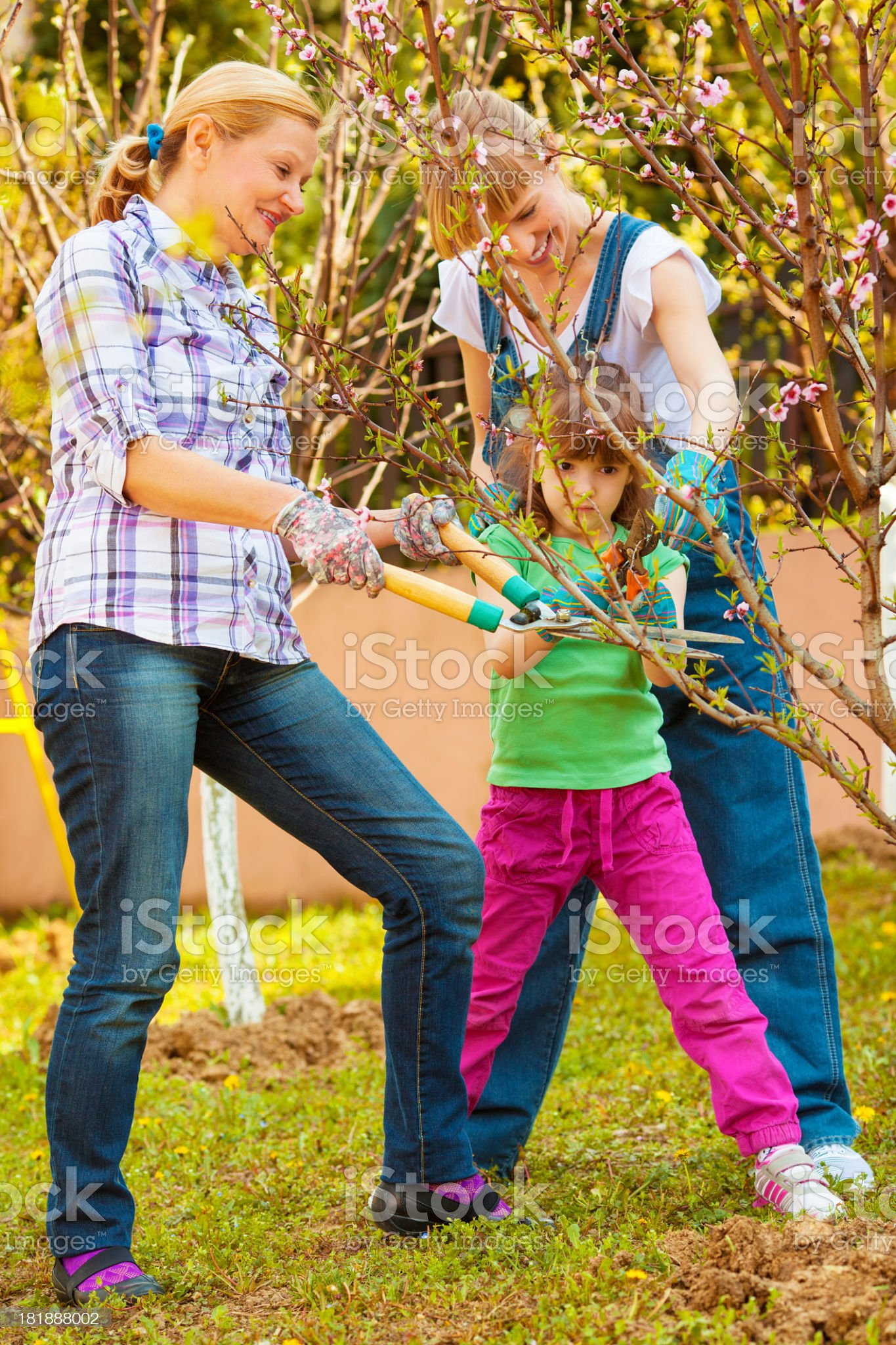 Family Working in Orchard. royalty-free stock photo