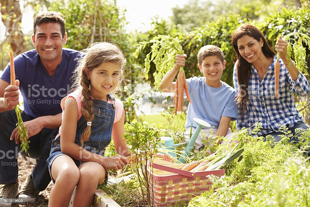 Family Working On Allotment Together stock photo