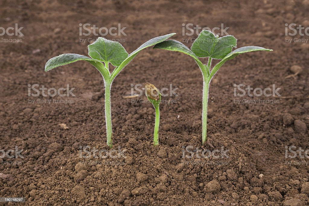 famliy love and care:plant in dirt stock photo