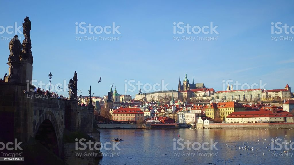 Famous Charles bridge, flying gulls, floating swans and distant Prague stock photo