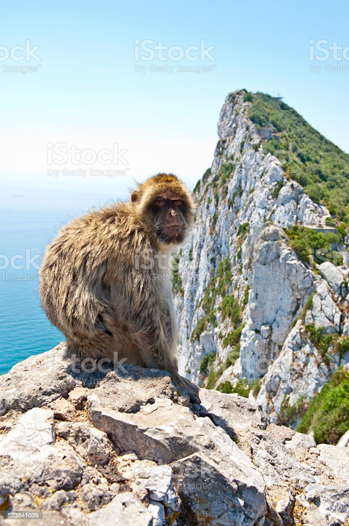 Famous Gibraltar Barbary Ape sitting on rock stock photo