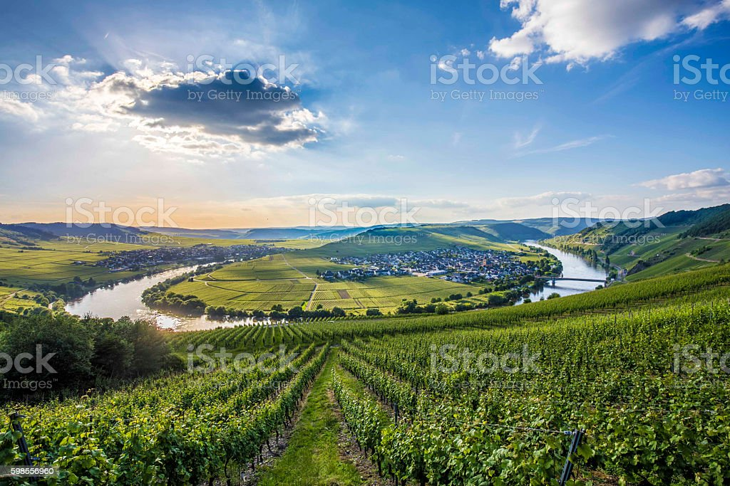famous Moselle river loop in Trittenheim stock photo