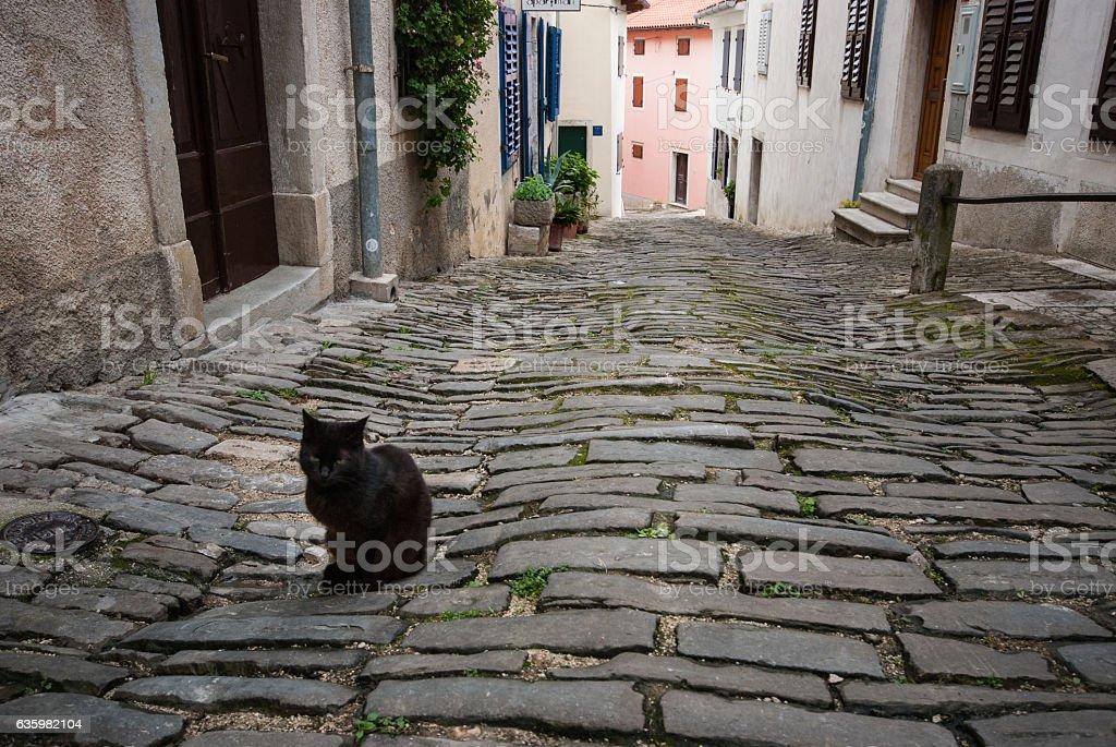 Famous Motovun, Istra, Croatia stock photo