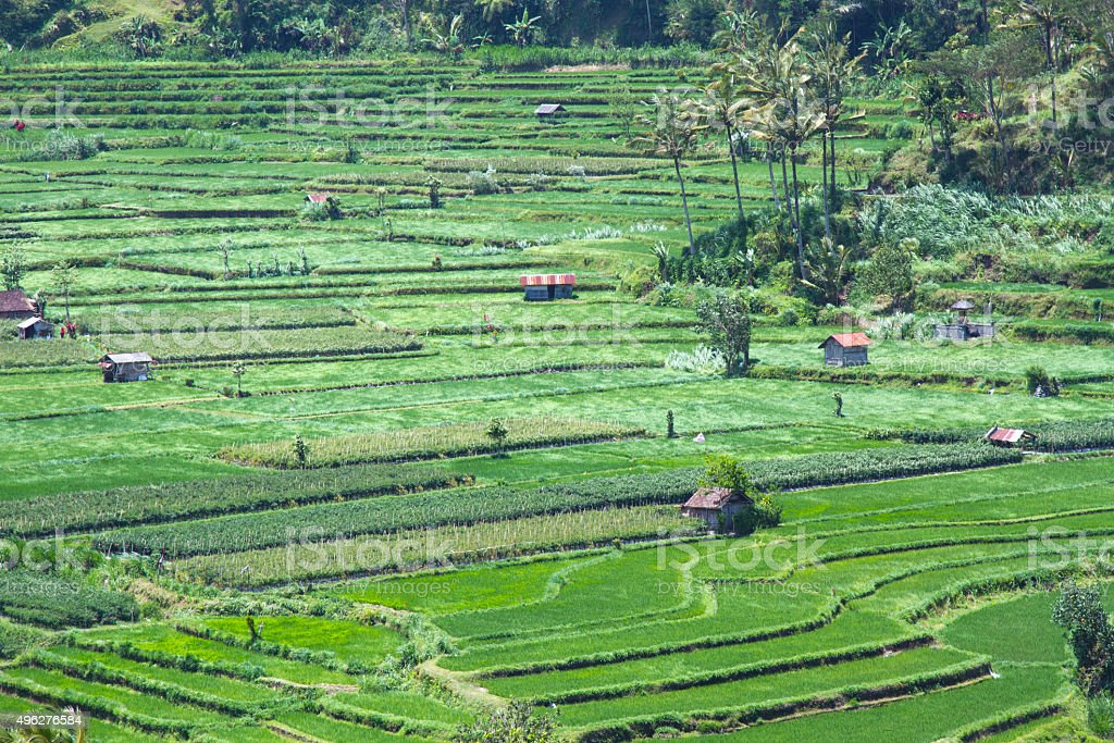 Famous rice terrace near tirtagangga in Bali Indonesia stock photo