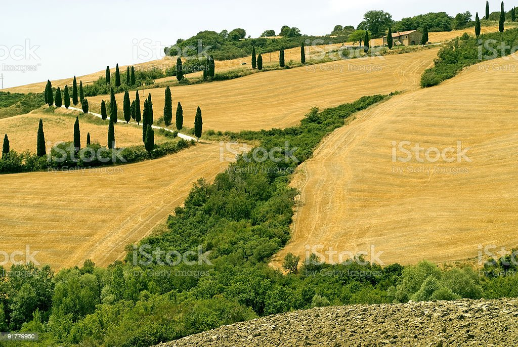 Famous winding road with cypresses in Tuscany (Italy) at summer royalty-free stock photo