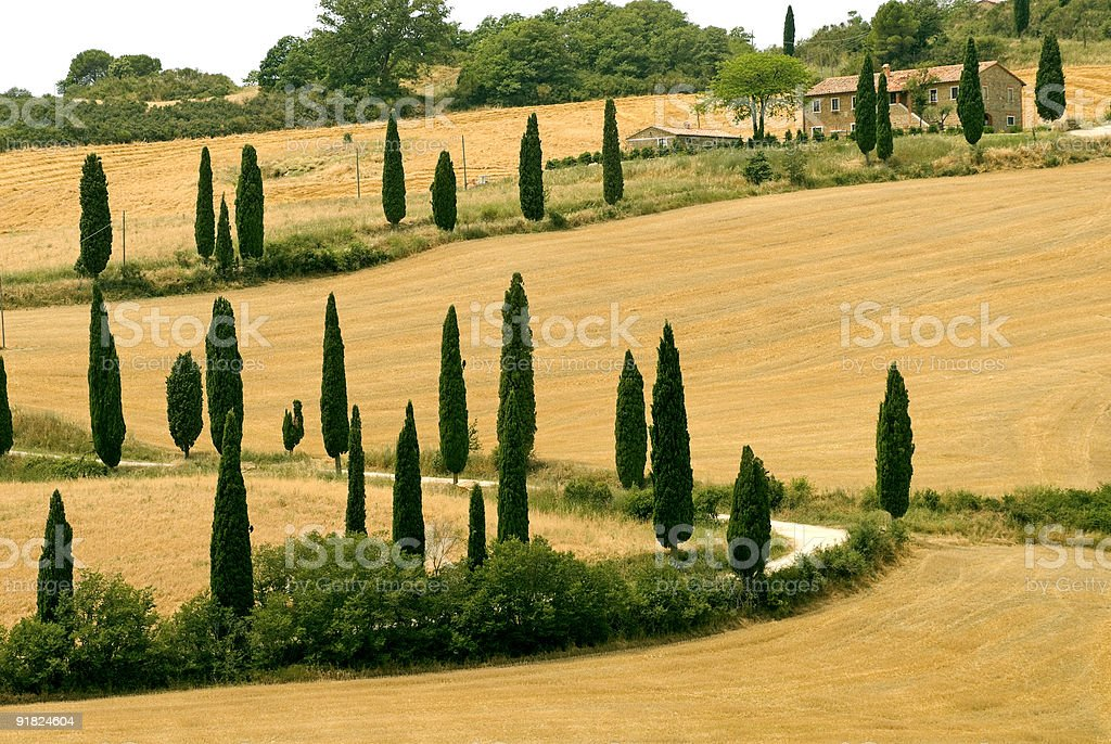 Famous winding road with cypresses in Tuscany (Italy) at summer stock photo