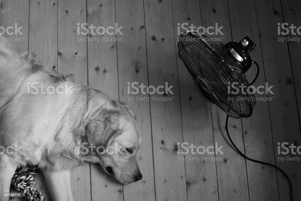 Fan and Dog stock photo